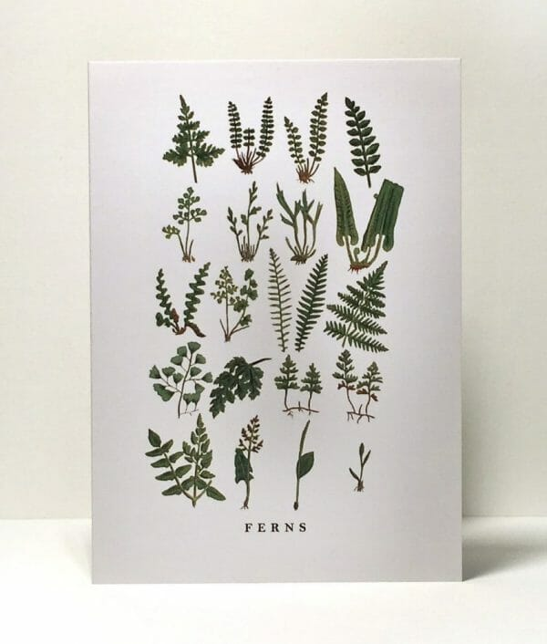 Photo showing an 'Assorted Ferns' illustrated gift card from Wildfolk Prints available to buy from Kensington Flowers