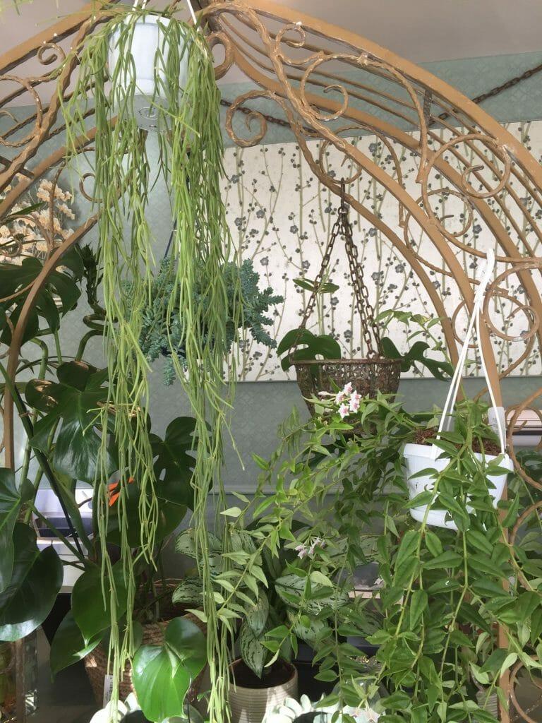 Indoor plants at KF Studio