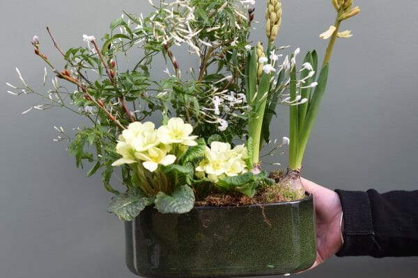 Photo showing a sample of a planted seasonal container of spring bulbs