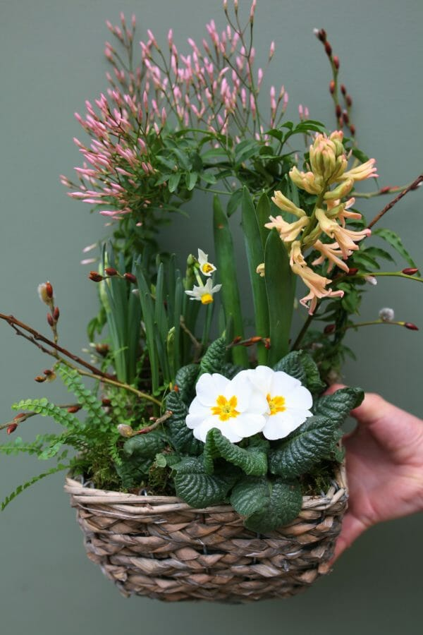 Photo showing a sample of a Planted spring basket available from Kensington flowers London